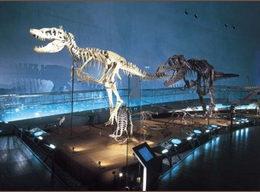 福井県立恐竜博物館(勝山市)